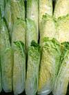 白菜(1/4切) 92円(税抜)