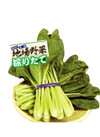 採りたて小松菜 100円(税抜)