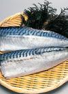 塩サバフィーレ 299円(税抜)