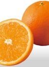 内田さんのネーブルオレンジ 105円