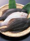 カラスカレイ 108円(税抜)