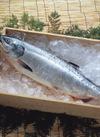 銀鮭刺身(養殖・解凍) 411円(税込)