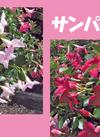サンパラソル 各種 398円(税抜)