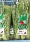青菜 100円(税抜)