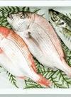 鮮魚トロ箱セット 1,000円(税抜)