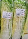 白菜 1/4カット 88円(税抜)