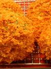 ジュワッと肉汁!絶品メンチカツ 278円(税抜)