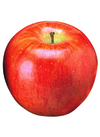 りんご(サンつがる) 178円(税抜)