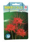 リコリス ラジアータ 498円