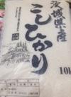 新米こしひかり 3,280円(税抜)