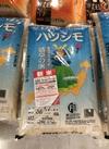 岐阜県産はつしも 1,980円(税抜)