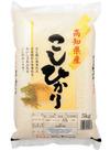高知県産こしひかり 1,680円(税抜)
