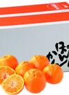 立目ポンカン 3,980円(税抜)
