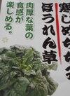 寒じめちぢみほうれん草 158円(税抜)