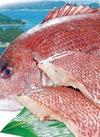 真鯛切身〈養殖〉 580円(税抜)