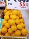 はっさく 55円(税抜)