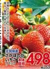 さがほのかいちご 498円(税抜)