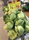 春キャベツ 98円(税抜)