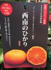 高級果樹苗 PVPハイブリッド柑橘 西南のひかり 1,980円(税抜)