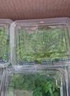 木の芽 150円(税抜)