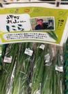ニラ 75円(税抜)