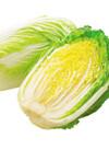 白菜 198円