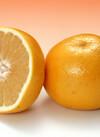 グレープフルーツ(ルビー種) 85円(税抜)