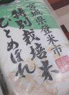 ひとめぼれ 1,680円(税抜)