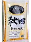 名古屋食糧 秋田こまち10kg 5%引