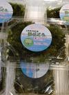 海ぶどう 480円(税抜)