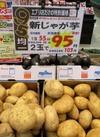 新じゃが芋 2玉 95円(税抜)