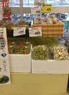 七折小梅 1,280円(税抜)