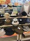 婦人帽子各種 30%引