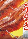 自家製うなぎ蒲焼(養殖) 1,980円(税抜)