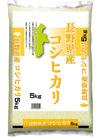 長野県産 コシヒカリ 1,770円(税抜)