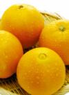 ネーブルオレンジ 4,000円