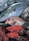 丸魚 410円(税込)