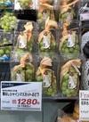 種無しシャイマスカット 1,280円(税抜)
