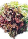 三ツ星野菜のサニーレタス 88円(税抜)