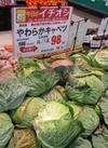 キャベツ 98円(税抜)