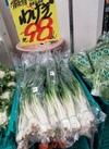わけぎ 98円(税抜)