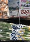 侍ねぎ 198円(税抜)