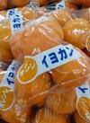 伊予柑 498円(税抜)