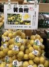 黄金柑(ゴールデンオレンジ) 295円(税抜)