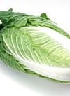 白菜1/4カット 98円(税抜)