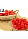 佐藤錦 2Lサイズ バラ詰め 1kg 4,580円(税込)