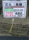 芝生(高麗) 528円