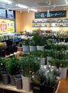 花卉コーナー 300円(税抜)