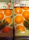 ネーブル 1,700円(税抜)