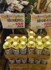 浅漬けの素レギュラー 203円(税込)